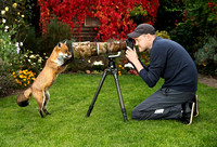Fox the Photographer