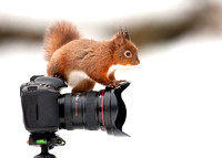 Curious Squirrel on  a Camera Lens