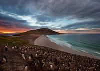Penguins in Falkland islands