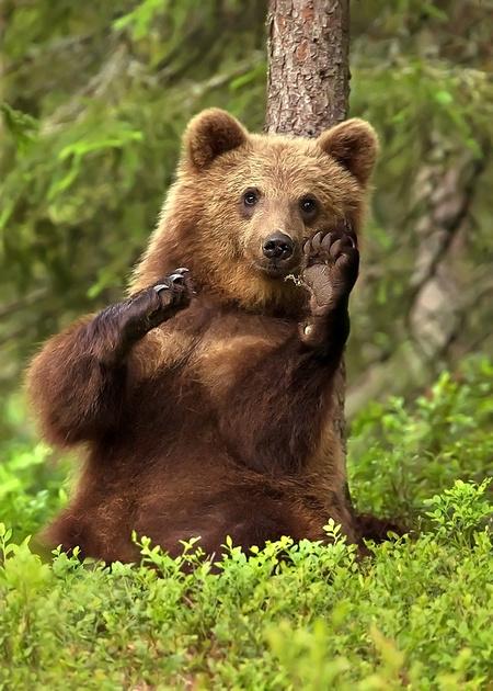 """Brown Bear """"Hi Five"""""""